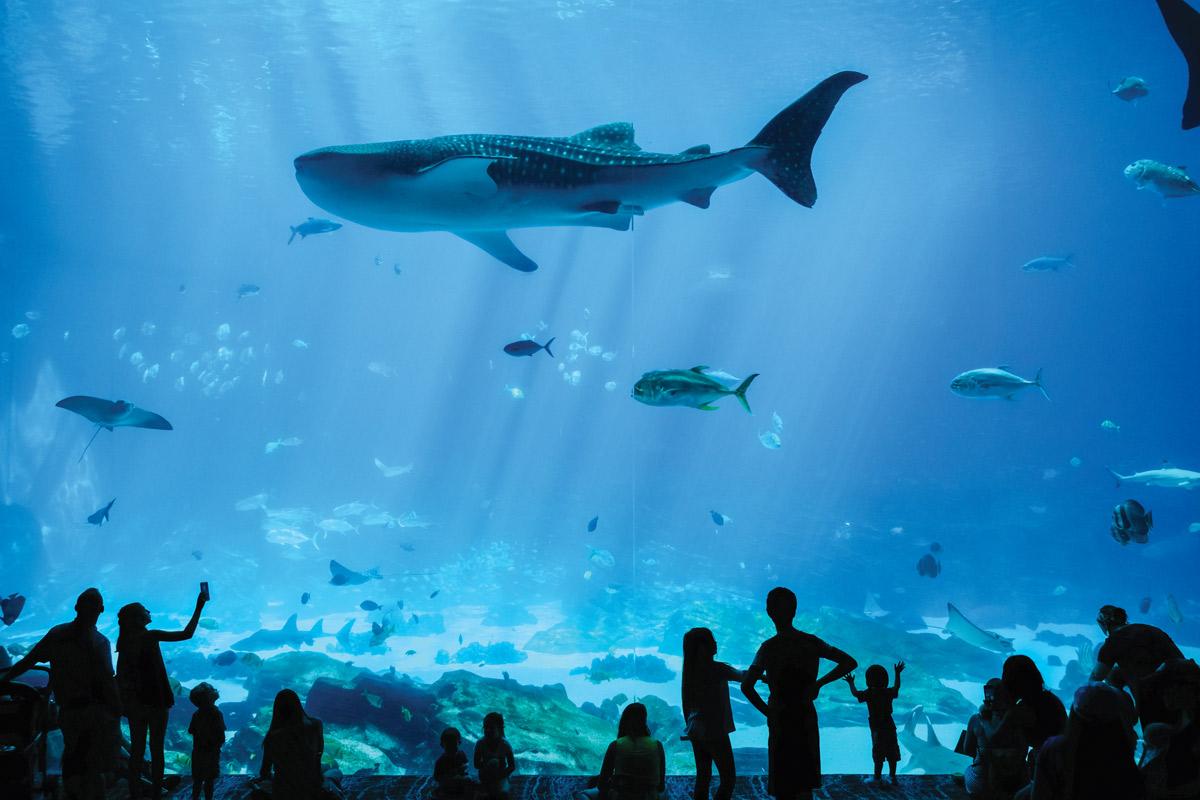 Georgia Aquarium Atlanta