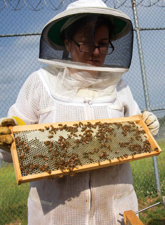 Arrendale State Prison Beekeeping
