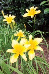 Garden Variety Flowers