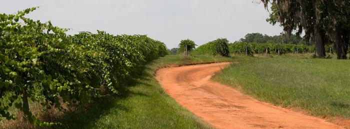South Georgia Wine Country