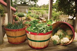 Garden Notebook: Veggie Tales