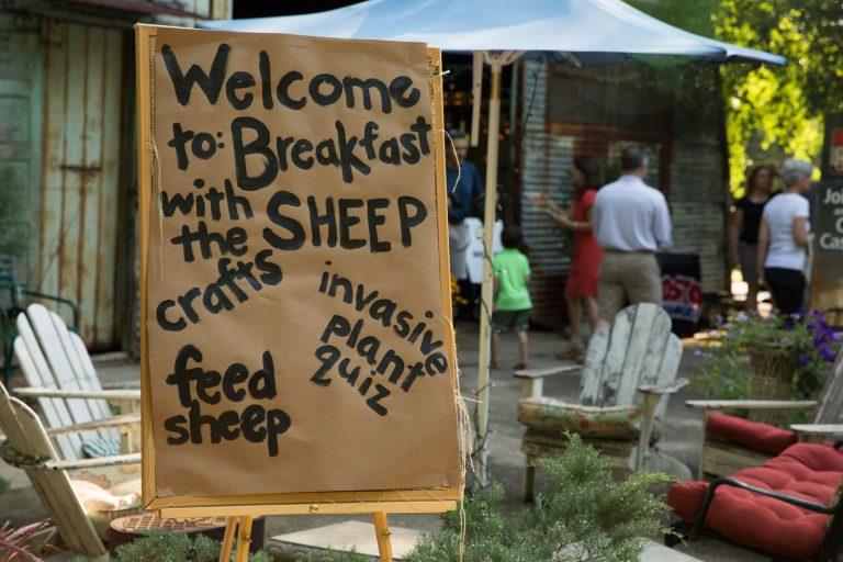 They're baa-ack! Meet the kudzu-clearing sheep