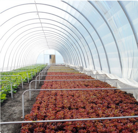 Atlanta Harvest hopes to create farms inside the perimeter