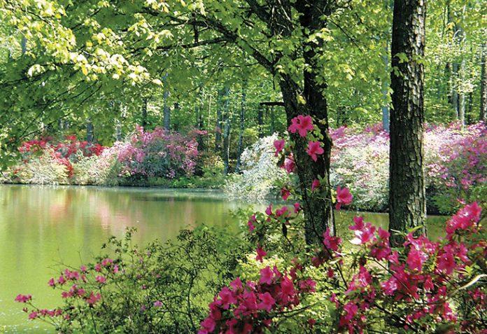 Photograph Couresy Of Callaway Gardens
