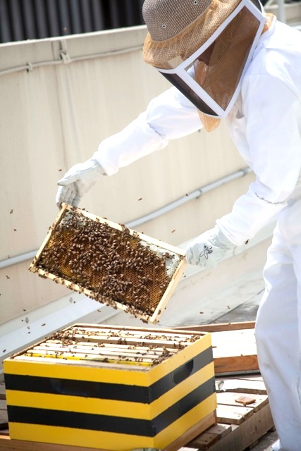 Urban beekeeping on the rise
