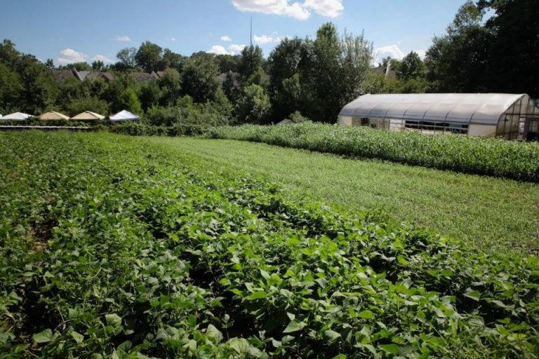 Urban farmers now opting to rent, not buy, land