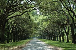 Best Driveway