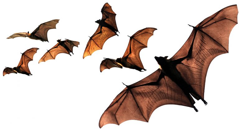 Save the Bats! (Not to mention the bees and the snakes)