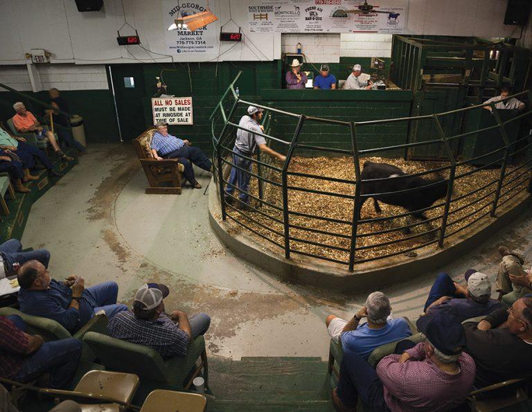 One Square Mile: Mid-Georgia Livestock Market