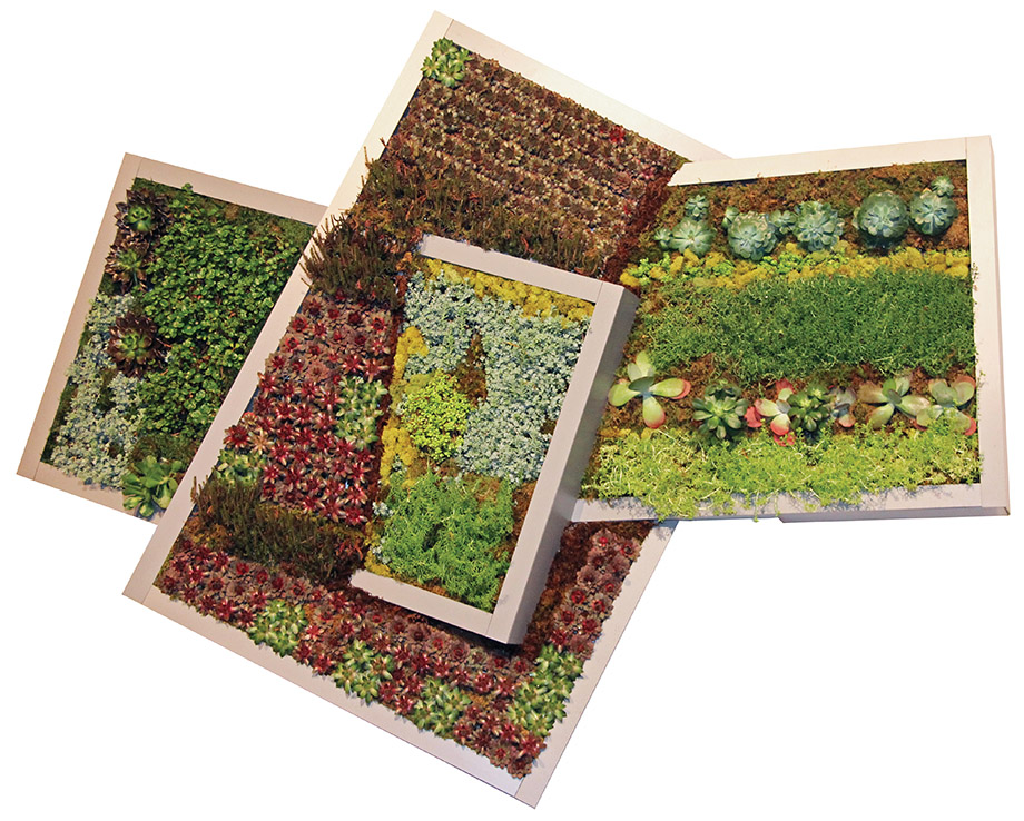 Photograph courtesy of Pennsylvania Horticultural Society