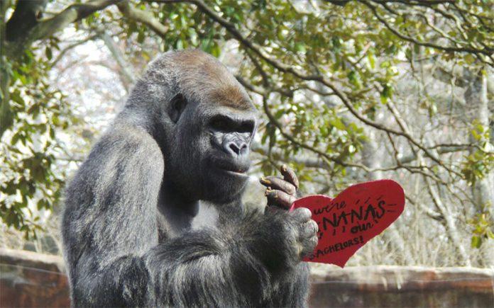22 Atlanta Valentine S Day Events To Celebrate Romance Atlanta