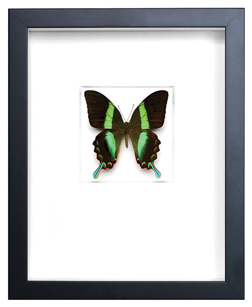 0315_butterfly011_oneuseonly