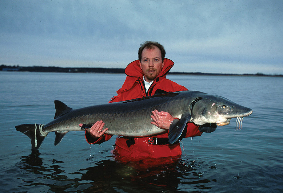 Doug Peterson holding a wild sturgeon at the edge of Lake Michigan