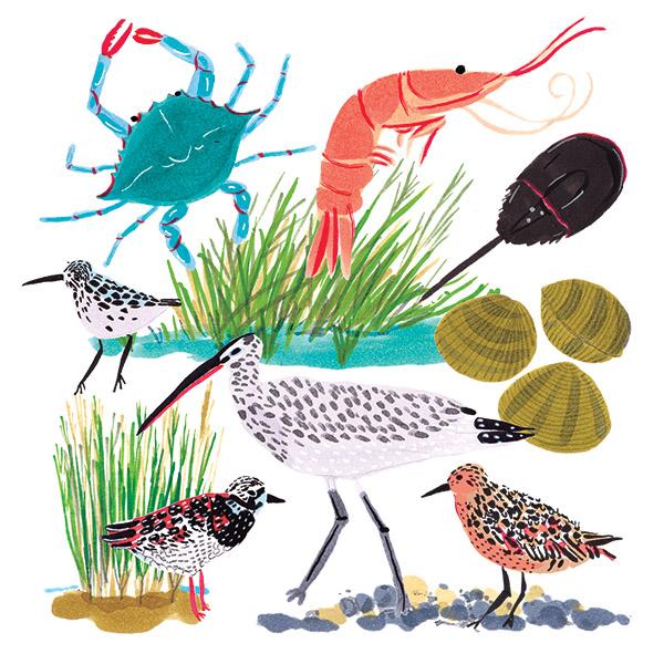 Illustration by Grace Lee/The Jacky Winter Group