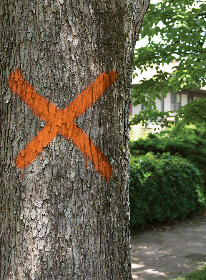 It takes a forest: How intown development puts Atlanta's tree canopy at risk