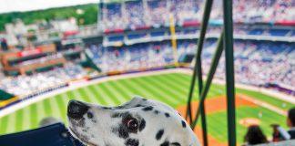 Atlanta Braves Bark in the Park