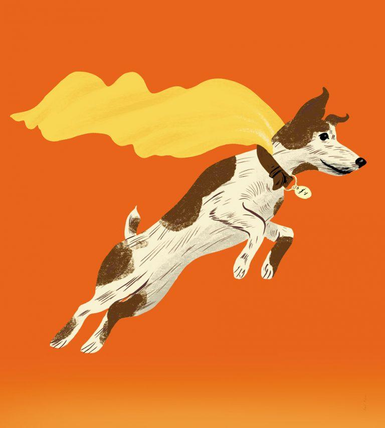 Saying goodbye to Crash, the Greatest Dog Who Ever Lived