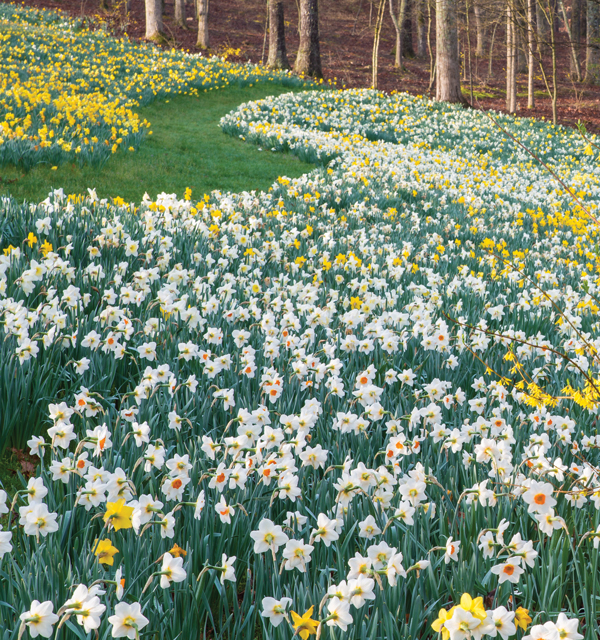 Best of Atlanta 2015: Floral Display: Daffodil Festival at Gibbs Gardens