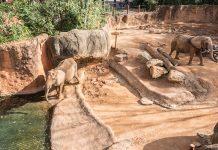 Zoo Atlanta elephants