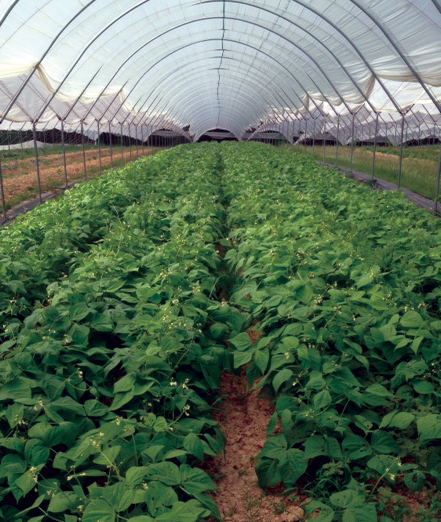 Local arugula in the winter? Thank a hoop house.