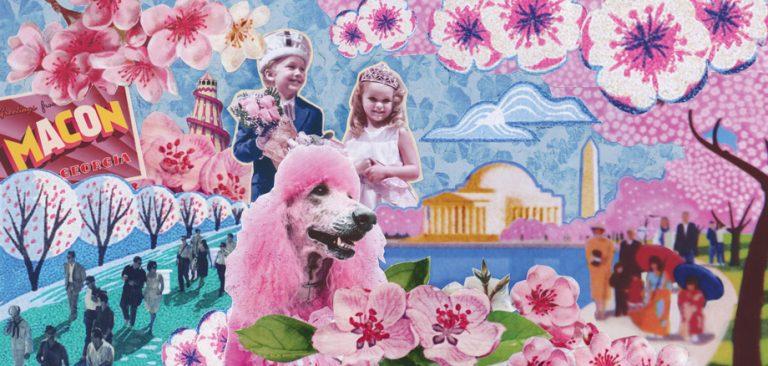 Who has the better Cherry Blossom Festival—Washington D.C. or Macon?