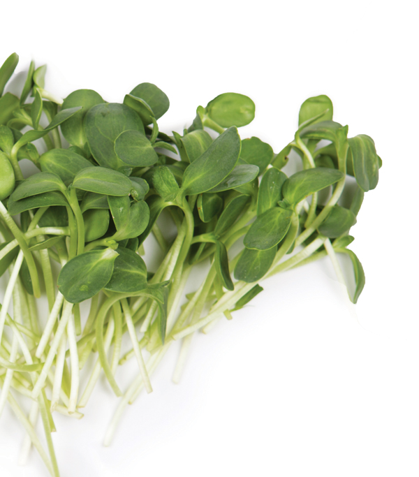 The key to a great spring salad? Add these local, flavorful sprouts.