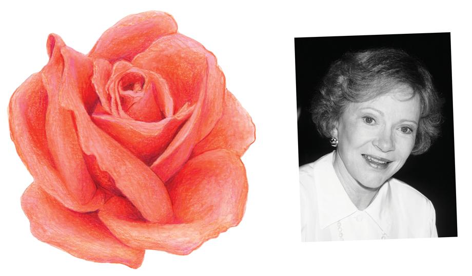 Rosalynn Carter Rose