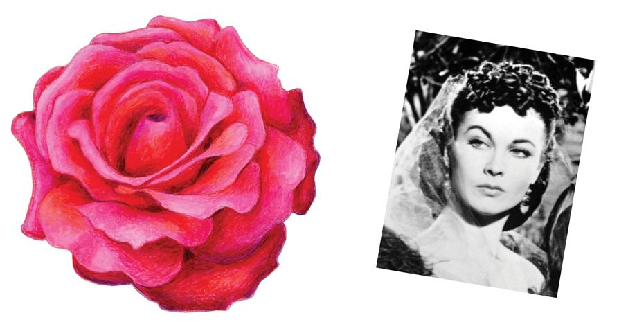 Frankly Scarlet Rose