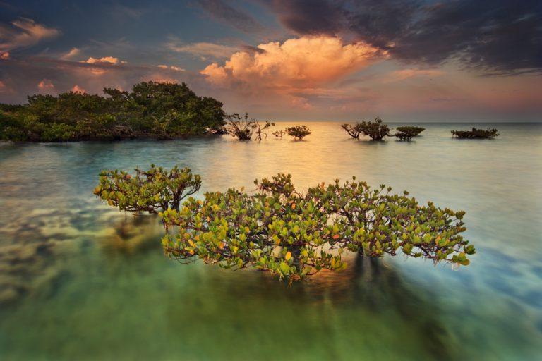 Underwater Wilderness: Biscayne National Park