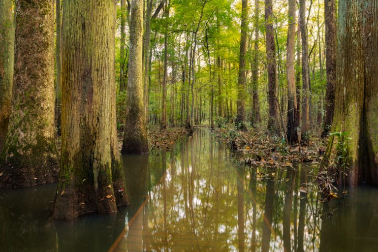 Land of Giants: Congaree National Park