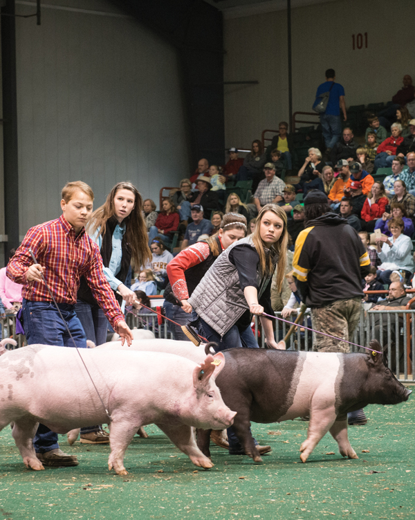 The Farm Team: Inside the high-stakes world of junior competitive livestock shows