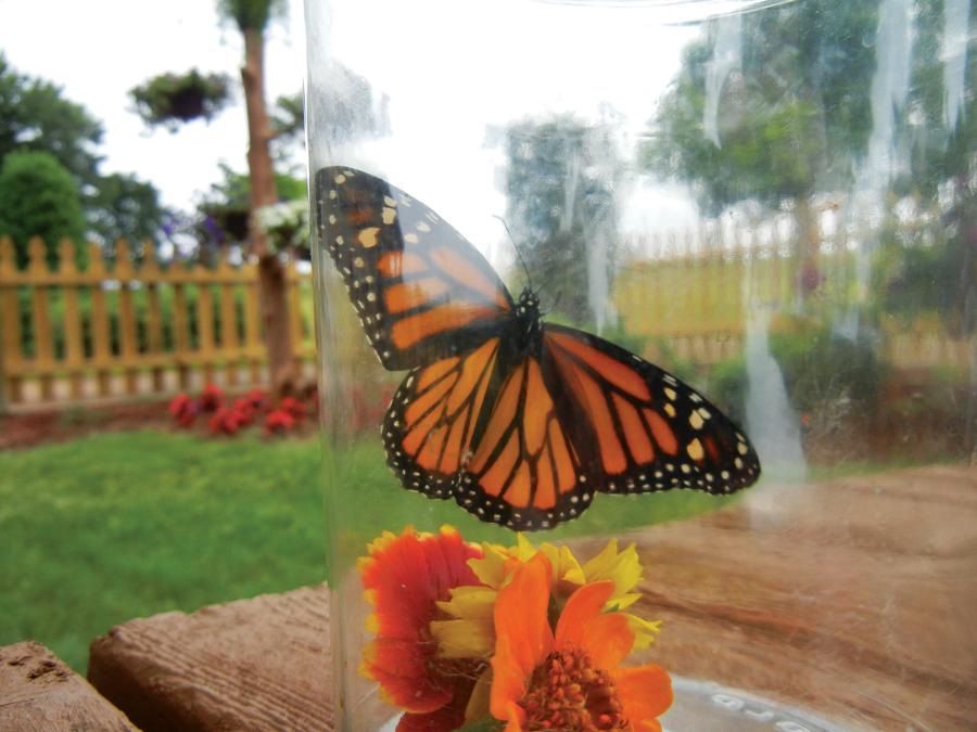 Rosalynn Carter Butterfly Trail Garden