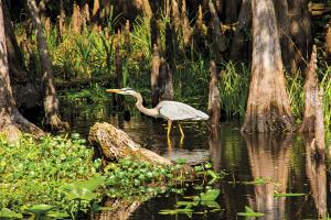 Large populations of wading birds stalk the river's shallows.