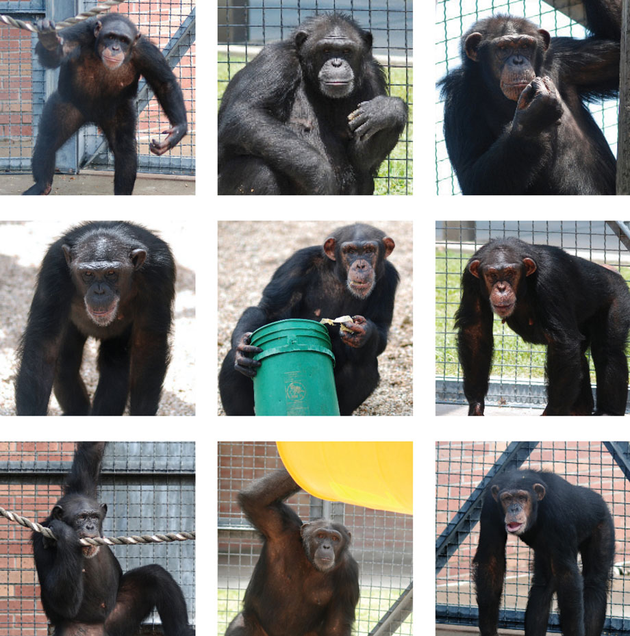 Project Chimps