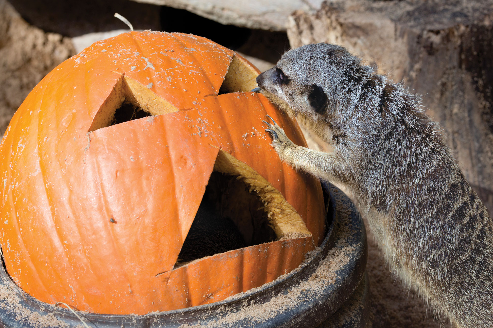 Halloween in Atlanta