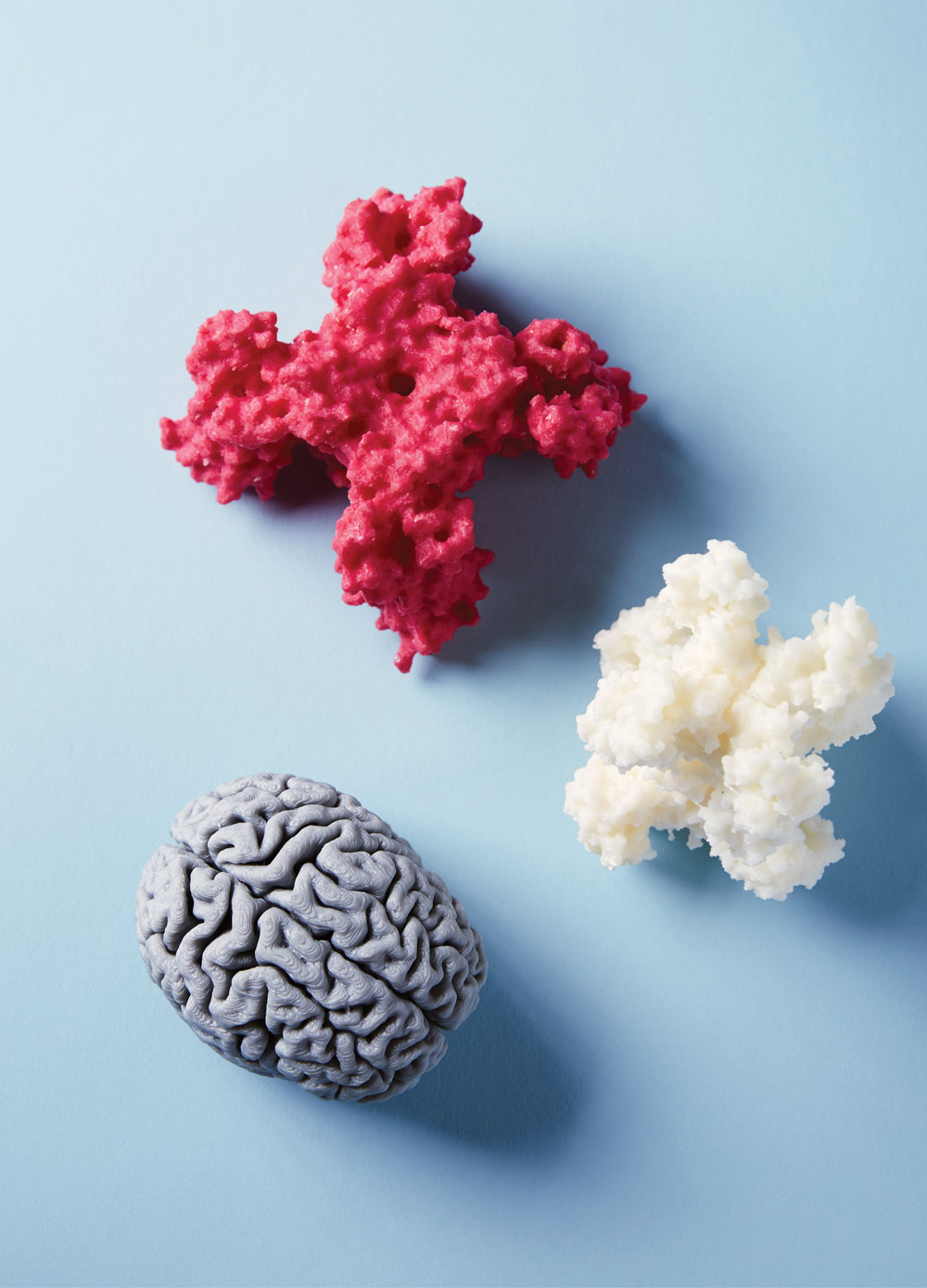 Goode has printed models of cell proteins and a model of a graduate studen'ts cerebral cortex, which he extracted from an MRI.