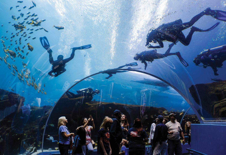 Georgia Aquarium Ocean Voyeger