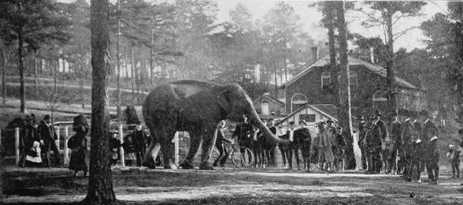 Zoo Atlanta circus