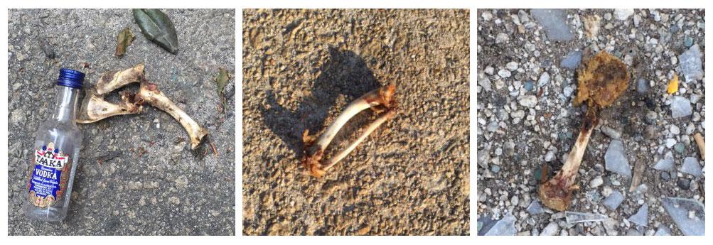 Chicken bones of Atlanta