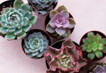 Southeast Succulents