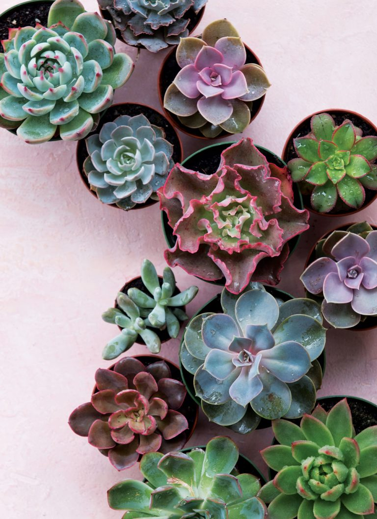 Get succulent savvy with these expert tricks