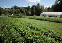 Love is Love Farm