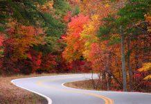 Northwest Georgia fall leaves