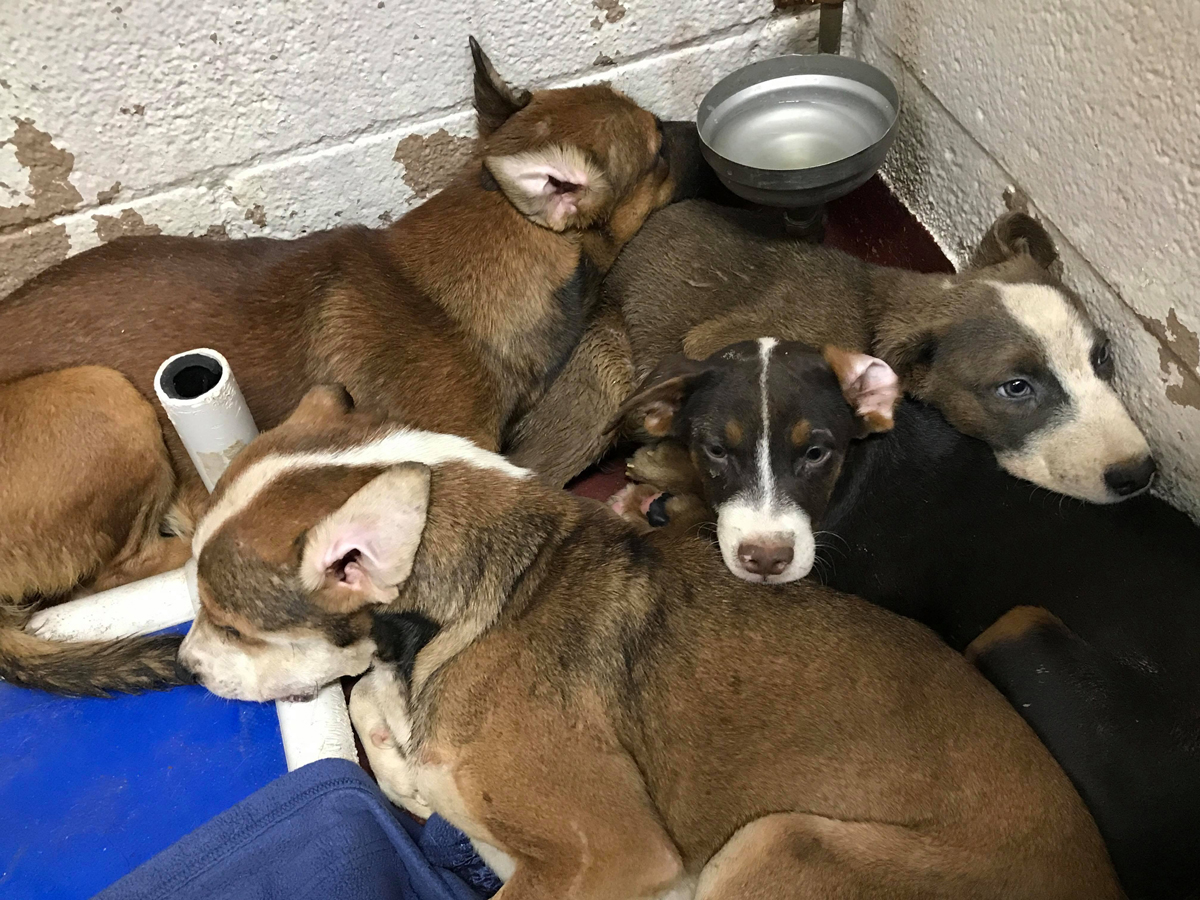 LifeLine Animal Project Fulton County hoarding dogs adpotion