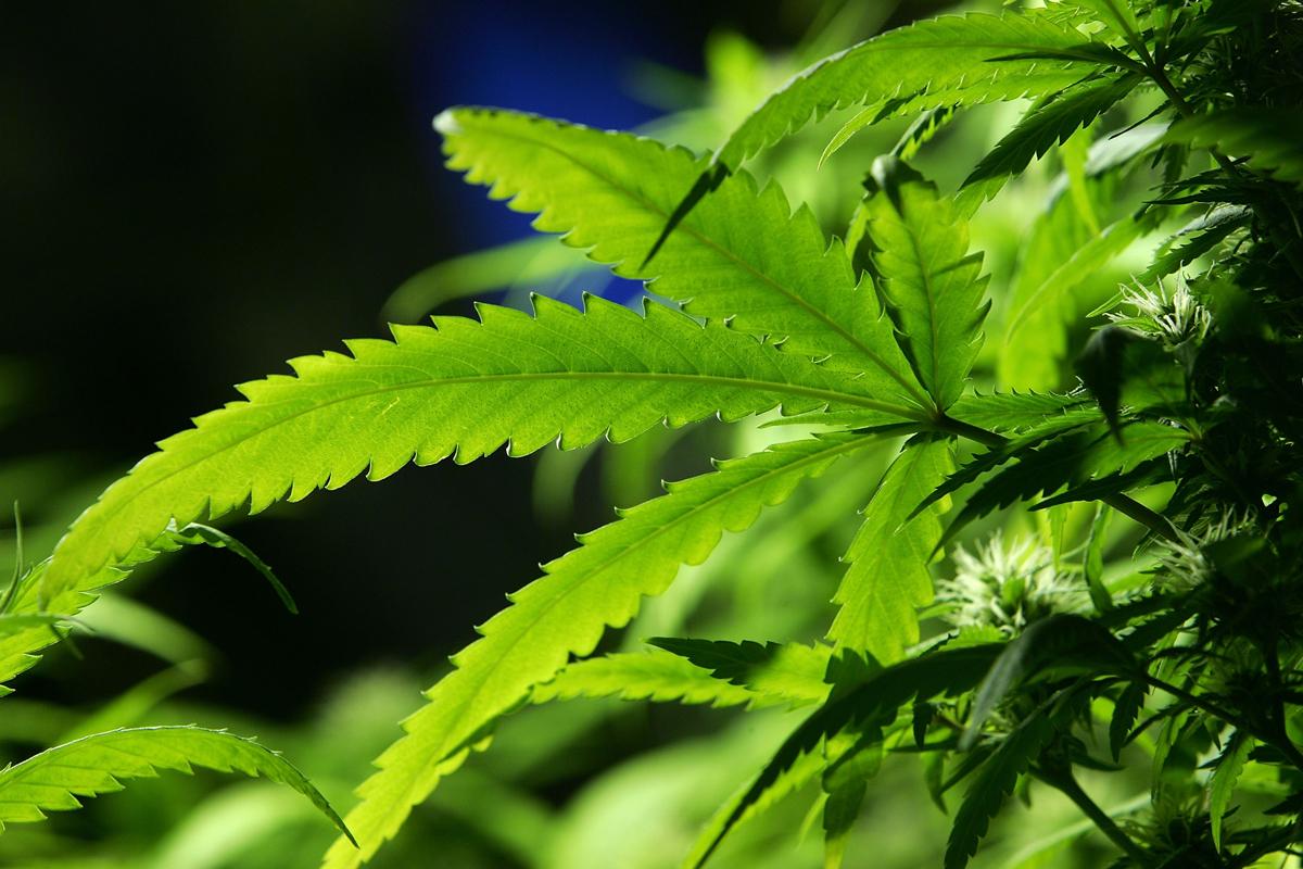 South Fulton marijuana law