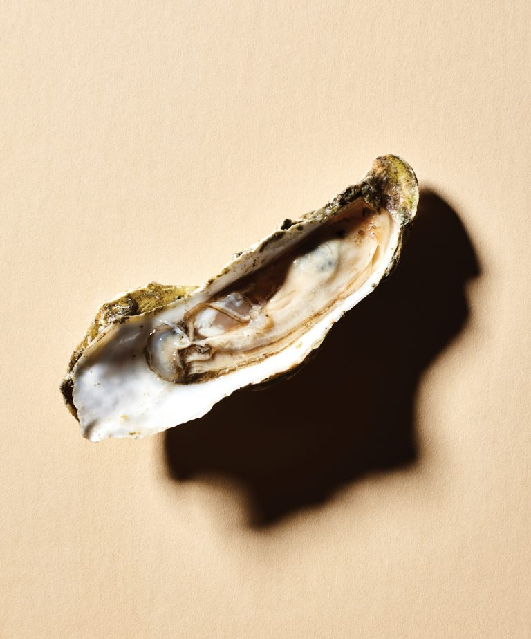 Will the Georgia oyster rise again?