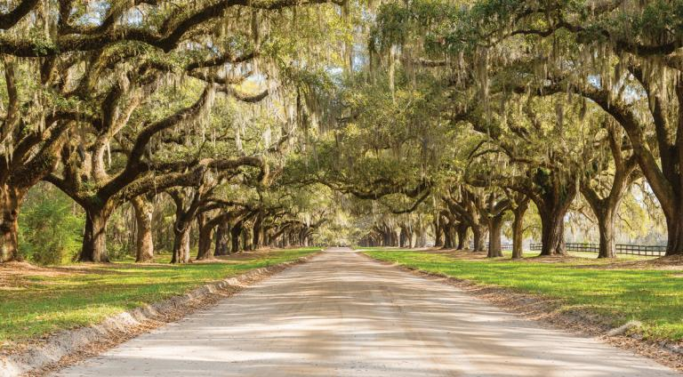 Plan your next road trip along South Carolina's coast
