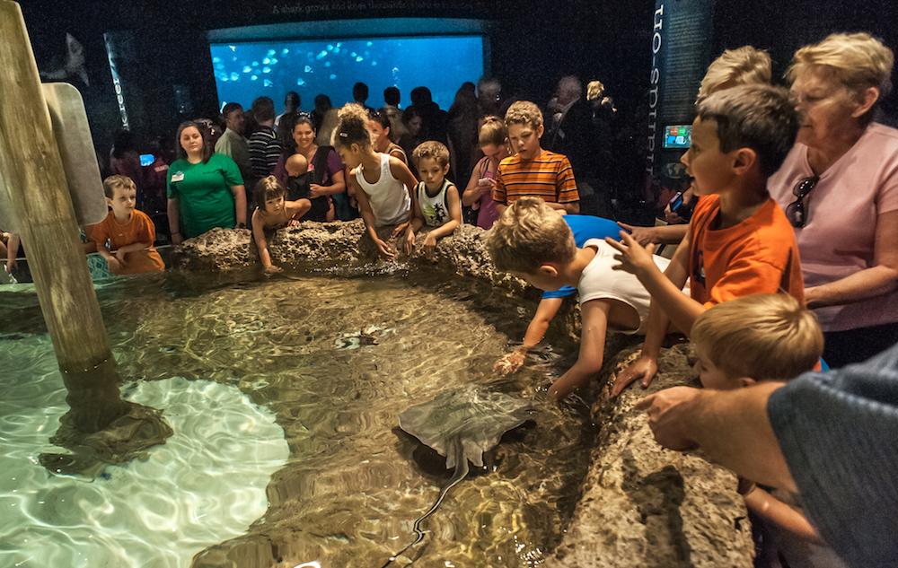 Greensboro - Greensboro Science Center aquarium