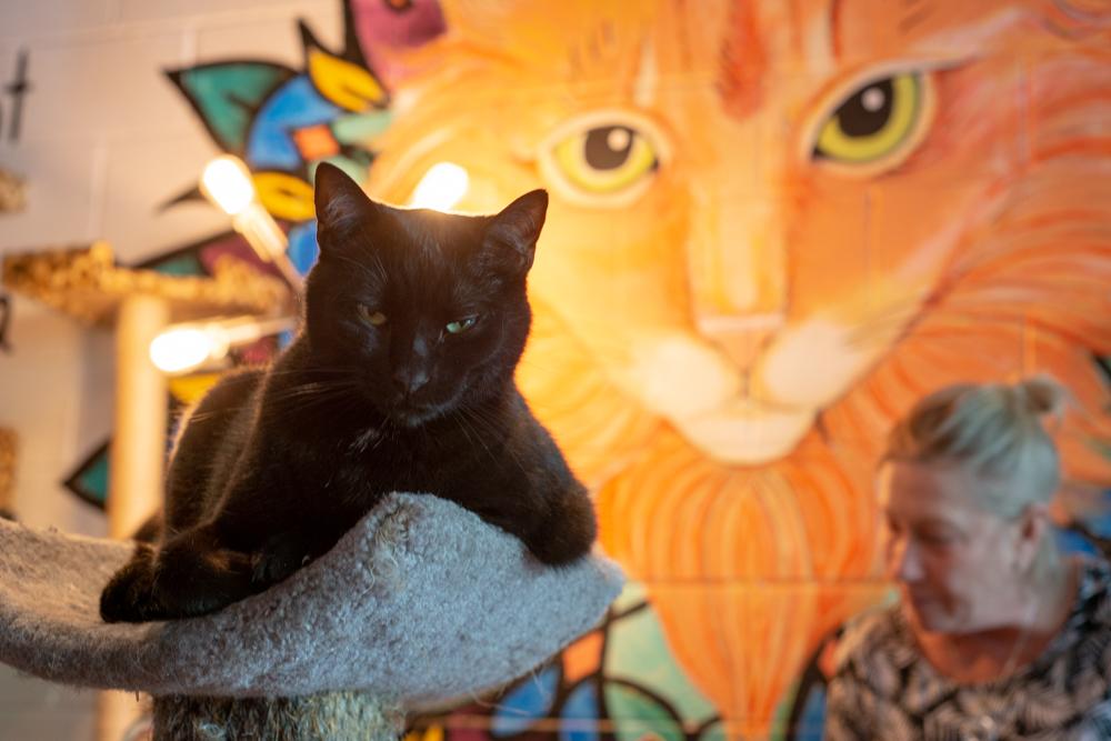 Java Cats Cafe Marietta