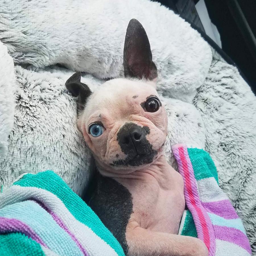 Alton Brown Rescue Dog Scabigail Atlanta